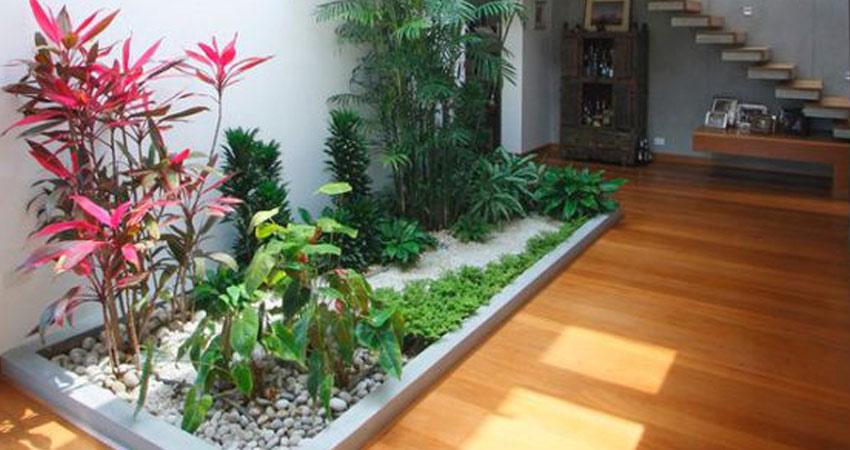 Irodaházak belső téri növény dekorálása, gondozása iroda novenydekor