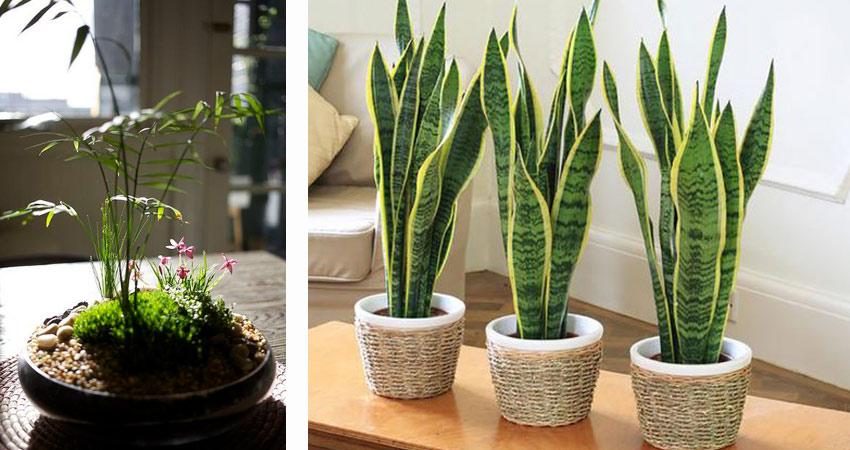 Irodaházak belső téri növény dekorálása, gondozása iroda novenydekor1