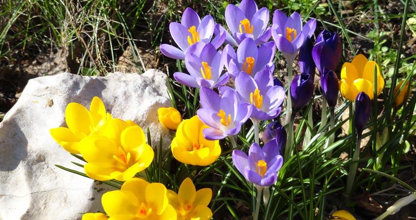 Tavaszi nagytakarítás a kertben Kertépítés Qgardens • Kertépítés • Főoldal kerttakar  t  s