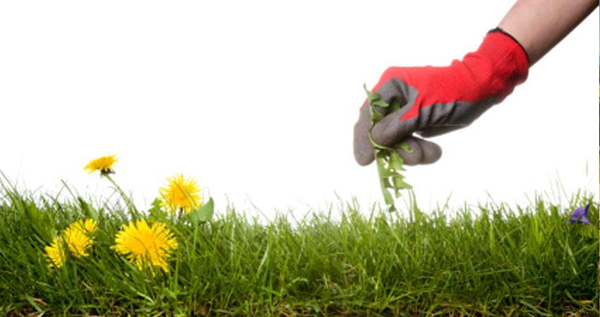 Növényvédelem gyomirtas 1