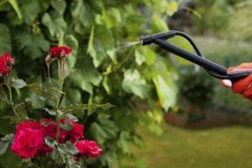 Növényvédelem  Szolgáltatások permetezes